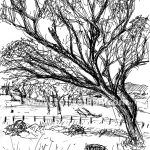 Draw085_warwicktree_00