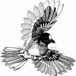 Ill005_bird_0