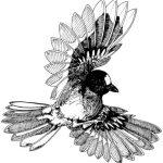 Bird Logo Illustration